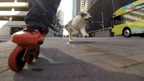 Skeeleren met je hond